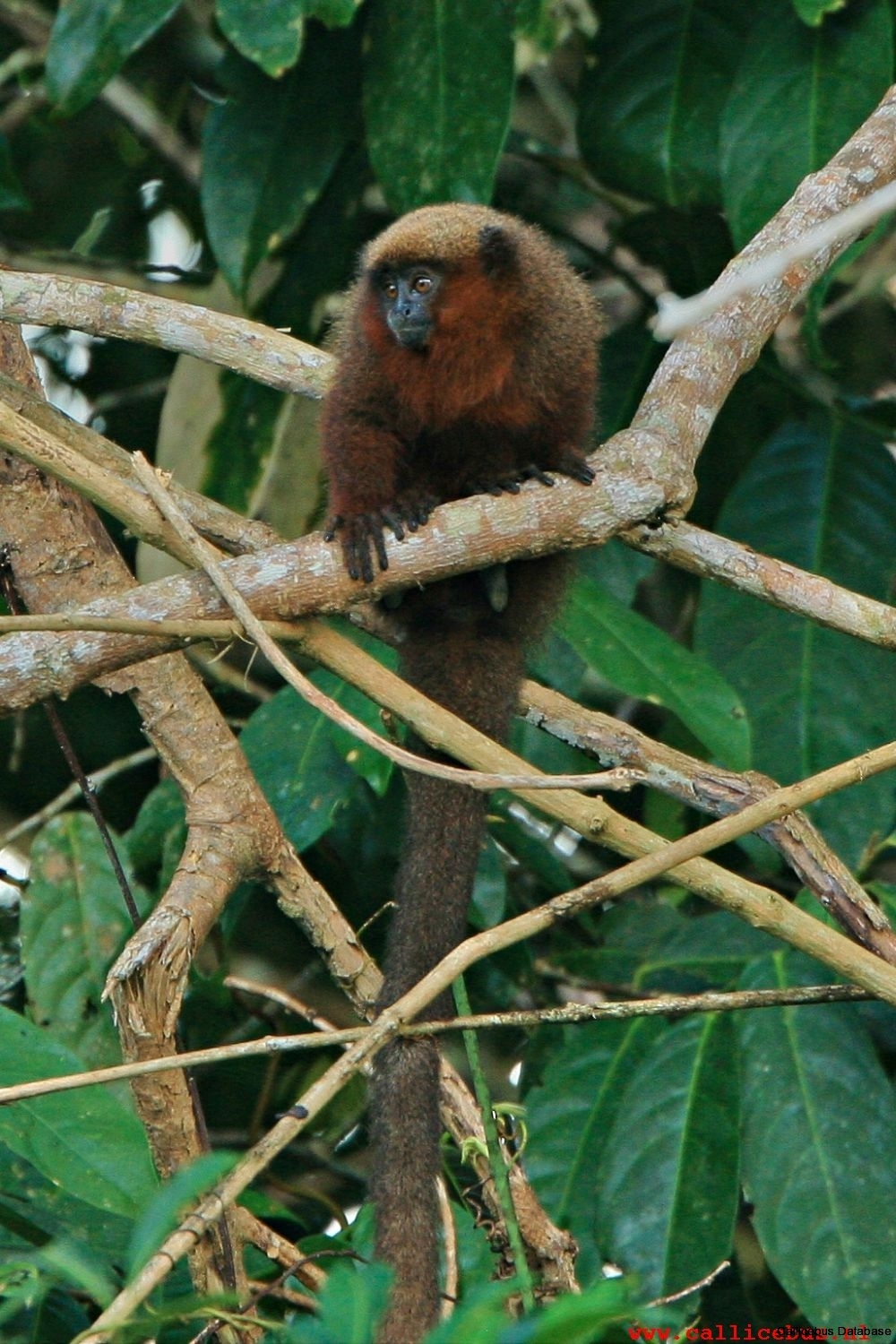 TOP21: Manu NP, on the border of the Río Alto Madre de Dios, Peru.