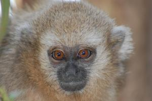 Pictures of wild titi monkeys